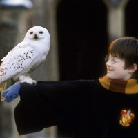 thumbnail_Harry_Potter_and_Hedwig